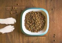 Ile powinien jeść dorosły pies